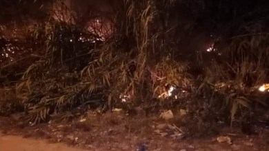Photo of سوسة : اندلاع حريق في اشجار زيتون والحماية المدنية تتدخل