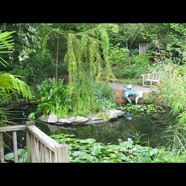 Pond in the Children's Garden at the Atlanta Botanical Garden in Atlanta, Georgia, project management by Tunnell and Tunnell Landscape Architecture.