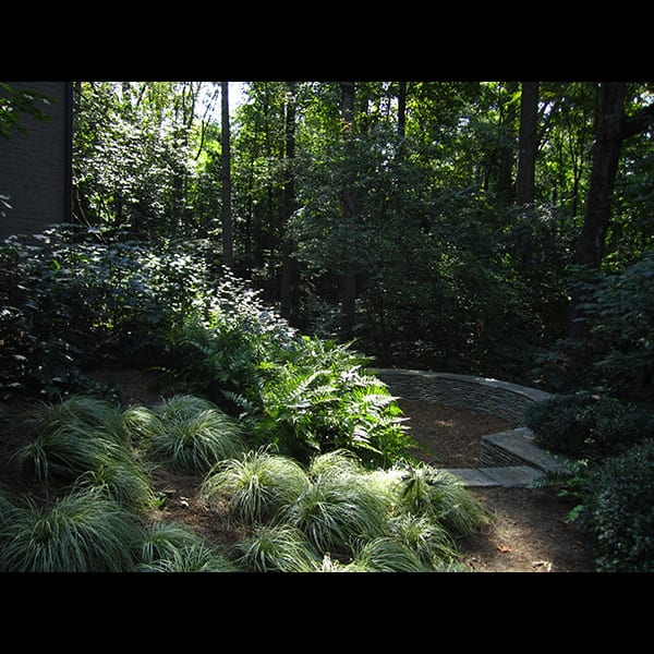 Grasses and ferns near a seat wall at a north Atlanta residence in Buckhead, landscape designed by Tunnell and Tunnell Landscape Architecture.
