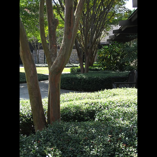 The courtyard at Northwest Presbyterian Church in Buckhead in Atlanta, Georgia, designed by Tunnell and Tunnell Landscape Architecture.
