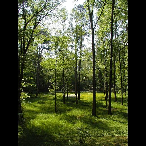 restored meadow in Atlanta, GA