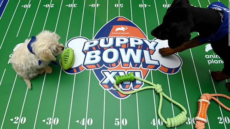 Todo listo: regresa el Puppy Bowl