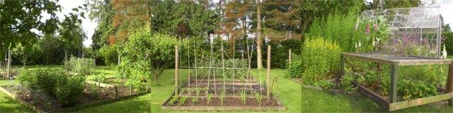 Garden Allotment