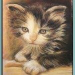 Kitten Portrait - Thomas Adamski
