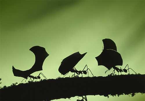 Nido-hormigas-1