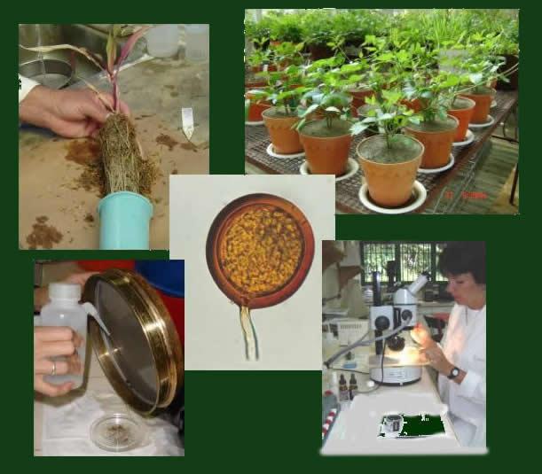 Laboratorio de Ecología de Suelos del Instituto Venezolano de Investigaciones Científicas. Foto IVIC