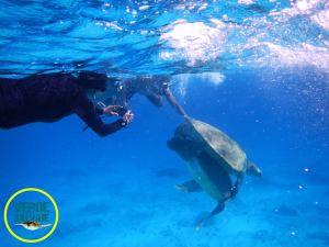 Tomas submarinas, foto Verde Salvaje