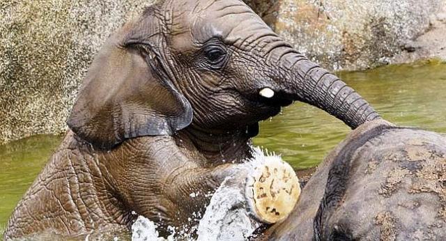 Elefantes del Zoo Moscu