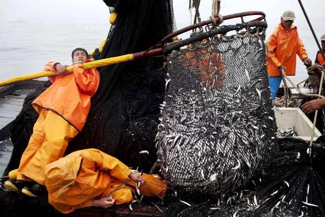 Aumenta el volumen de pesca de especies marinas menores