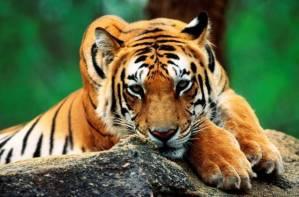 Es tarea de todos proteger las especies amenazadas