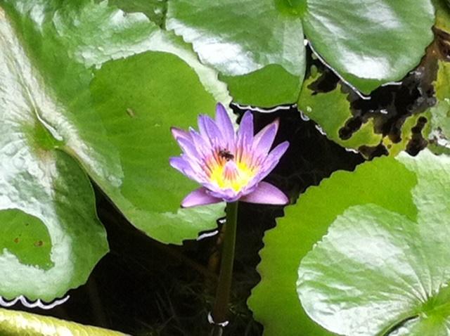 Naturaleza viva en el jardin acuático. Foto Marisela Valero