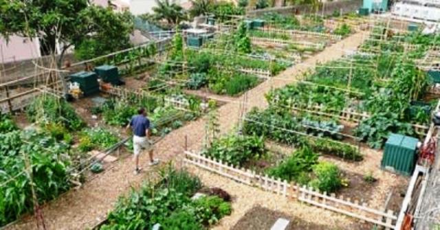 Huertos urbanos una opcion valida para alimentar al planeta