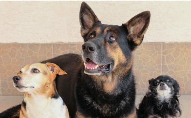 3ELDERLY_DOGS