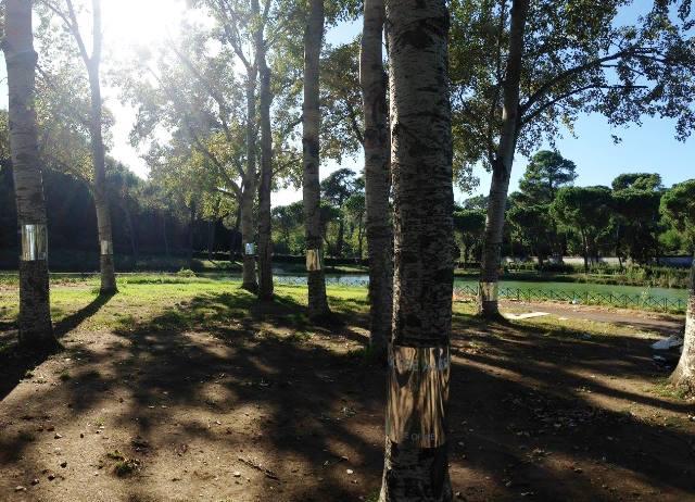 Arborvitae, foto de A3 paesaggio