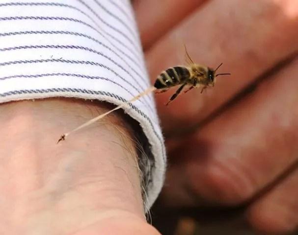 insecto picando