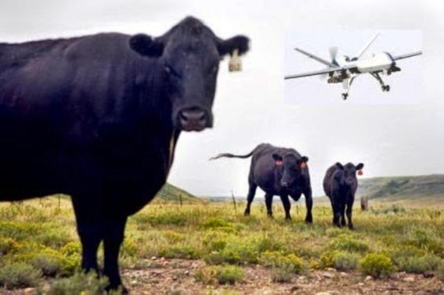 El ganado custodiado por drones