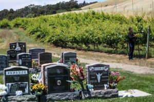 Viñedo en el cementerio del Santo Sepulcro de Oakland