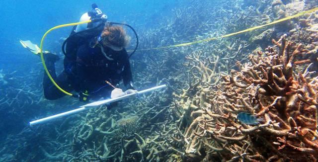 1-corales