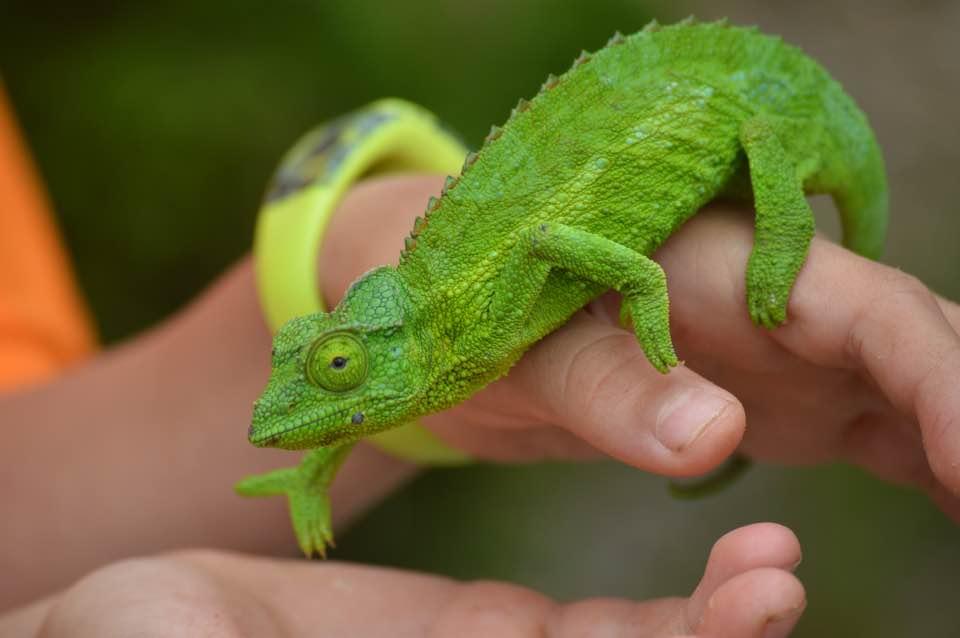 La  biodiversidad es vital para el planeta