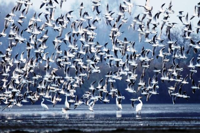 Aves vuelan en grupo por orientación