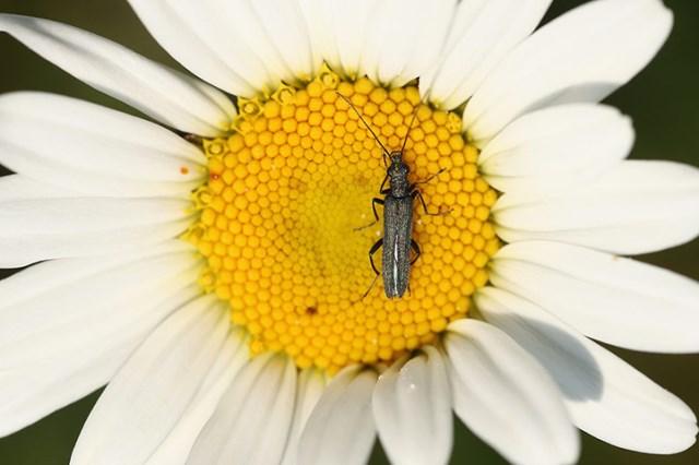 La polinización de los insectos es indispensable