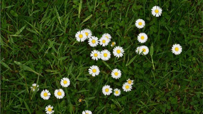 ¿Sabes cuan importante es la grama?