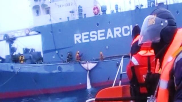 Esconden la cacería de ballenas detrás de supuesta investigación