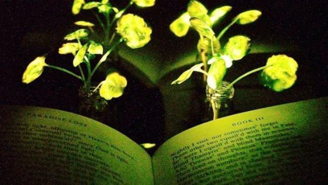Flores con luz- Foto MIT