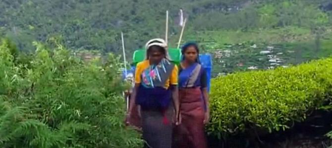 Green Paradise Sri Lanka – Full Travel Documentary BBC