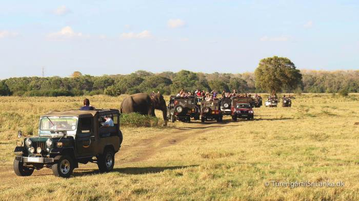 Jeep safari i Minneriya National Park