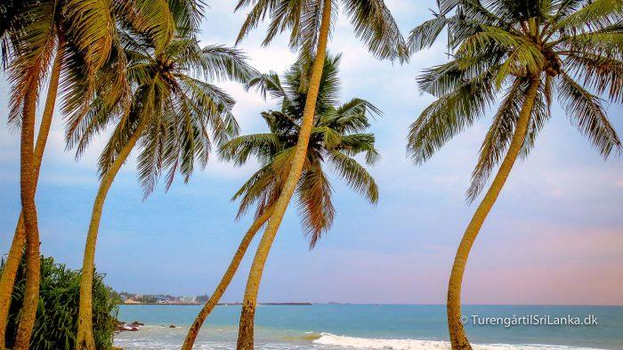 Palmestrand Sri Lanka