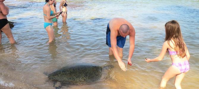 Svøm med havskildpadder i Hikkaduwa