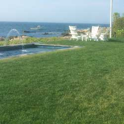 image of grass sod installation on a commercial or residential property