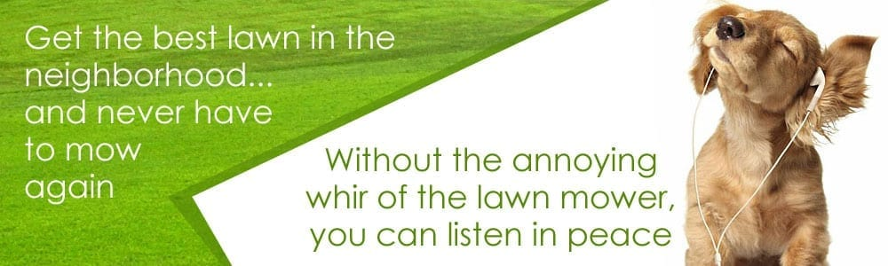 Get the best lawn in the neighborhood and never mow again!