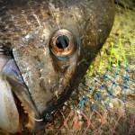 へち釣りってこんなに楽しかったっけ?チヌを初めて釣り上げた喜びを文字にしてみました。