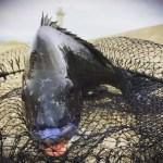 【目印落とし込み】パイル地獄バコバコウハウハ!午後からも神戸沖堤防をはしごし仲間とワイワイ楽しい釣行になりました