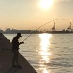 【目印落とし込み】今年累計300枚目のおチヌ様はパワーファイターでした。神戸渡船で1日5防満喫。風、潮、時間、場所。それが合致するとアタリまくり。