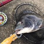 【テトラ前打ち】釣れる時間は予想通り?!それにしてもシャローテトラは辛気臭いコガネ打ちで釣れますなぁあ(笑)