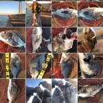 北港スリット漢のレーダーと週4日釣行で満身創痍で満足?!リンユウサイヘチスペシャルM300も入魂完了しますた。