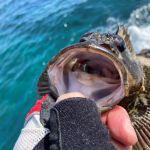 御座の磯釣り西井渡船さんでグレ釣りです