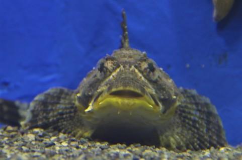 新種の生物発見か!?おたる水族館で特別展示!