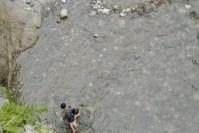 相模川で鮎が解禁と共に大変!大量遡上そして今年は豊漁!