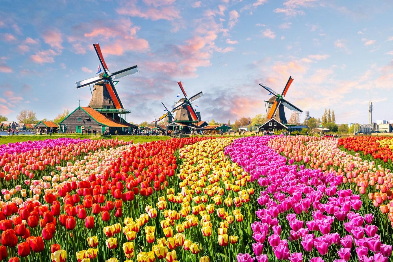 Keukenhof: o maior parque de tulipas do mundo oferece visita virtual