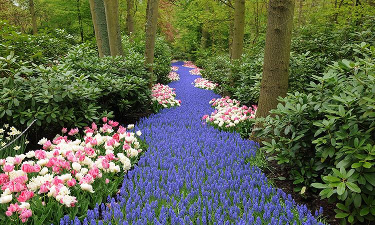 Jardim Keukenhof na Holanda