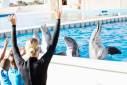 Zoomarine no Algarve: conheça esse incrível parque aquático