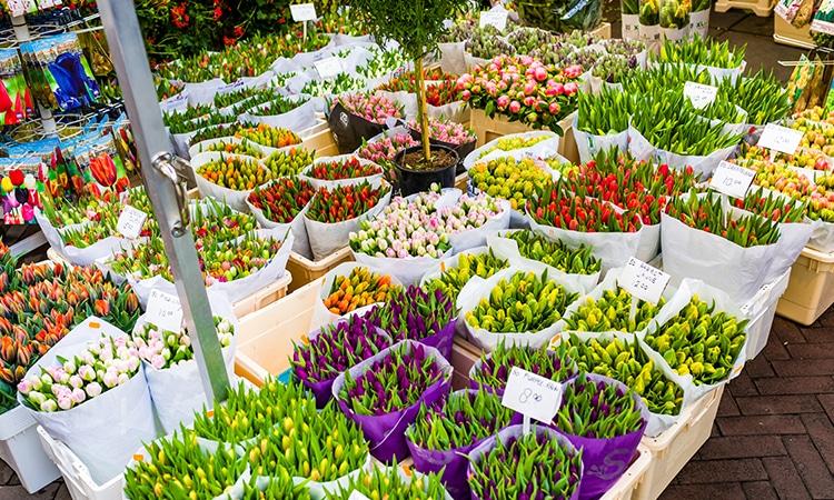 Pontos turísticos de Amsterdam mercado das flores