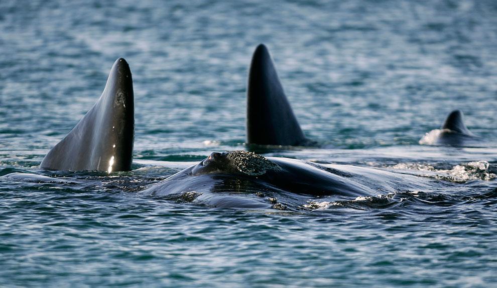 Las ballenas vuelven a visitar las costas patagónicas