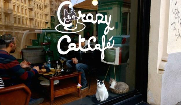 """Perros y gatos, además de animales domésticos, son compañeros de vida. Por eso bares y restaurantes italianos """"pet friendly"""" los reciben junto a sus dueños."""