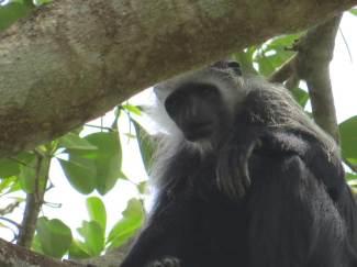 Observacion de primates en Iemberen Guinea Bissau (5)