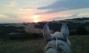 Umbria and Horse
